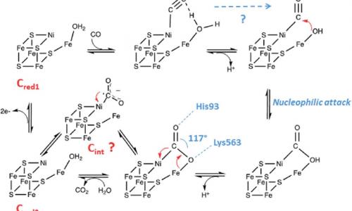 Le Monossido di Carbonio Deidrogenasi, CODH