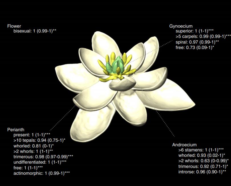 Nel Cretaceo il Primo Fiore