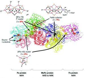 Le Nitrogenasi