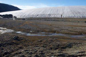 Nuovi Funghi dal Ritiro dei Ghiacci Artici