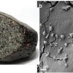 Metallosphaera sedula, il divoratore di meteoriti