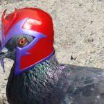 Magnetorecezione, Criptocromi e Orientamento degli Animali
